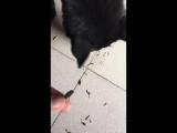 Китайская собака по кличке Тупица щелкает семки и чистит арахис