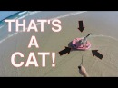 CAT Skimboards then Gives High Five!