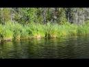 Лесное озеро в д Вины Крестецкий р н Новгородская обл