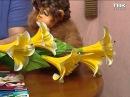 Лилии размножение черенками и луковицами