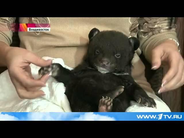 К дверям Владивостокского цирка неизвестные подкинули гималайского медвежонка