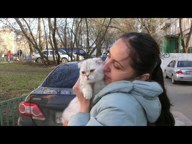Прием в проф. клубах кошек PCA 15.04.2017г