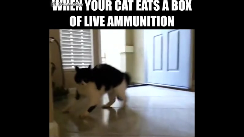 Где свербит у кошки