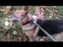 Сегодня ушёл из жизни член нашей семьи, часть её.. верный пёс Гектор Пусть простит меня мой друг Dj Manshin что не под его музло