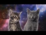 Ремикс Спейс поющие коты !