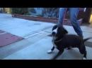 Пёс из приюта не смог сдержать эмоций когда понял что его пришли забрать а не усыпить