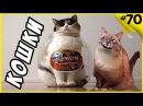Самые смешные кошки приколы про кошек и котов 2017