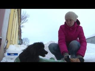 Уфимцы развернули настоящую спасательную операцию, чтобы помочь собаке с перел ...