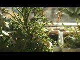 Winter light | Sony a6000 first test