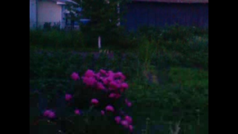 Відео 2.06.17 вечер спів птахів, галас сусідів .... ЛІТО