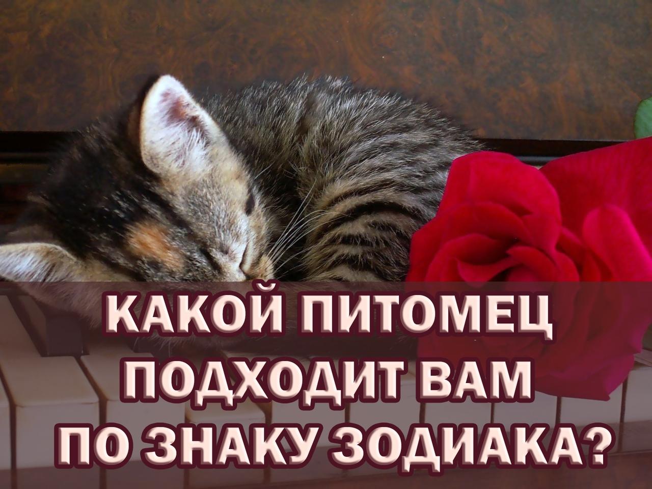 https://pp.userapi.com/c638526/v638526593/30da1/dKq_ZbXtEmA.jpg