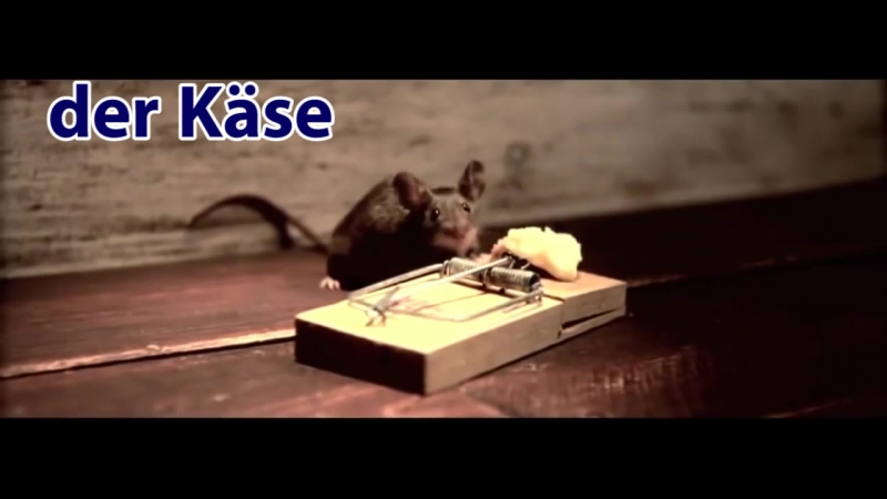 Словарный запас - der Käse (cheese) -сыр