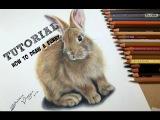 TUTORIAL #9 - How to draw a realistic bunny - Channel Sheldene Fine Art