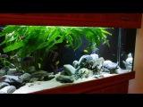 Система фильтрации в моем аквариуме. Малавийские цихлиды 540л.