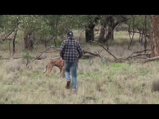 Punched in the face a Kangaroo | WASTED