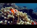 Raja Ampat 2016 - Kri Eco Resort - GoPro Hero 3 - long version - Full HD