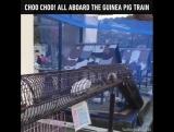 Guinea Pig Train