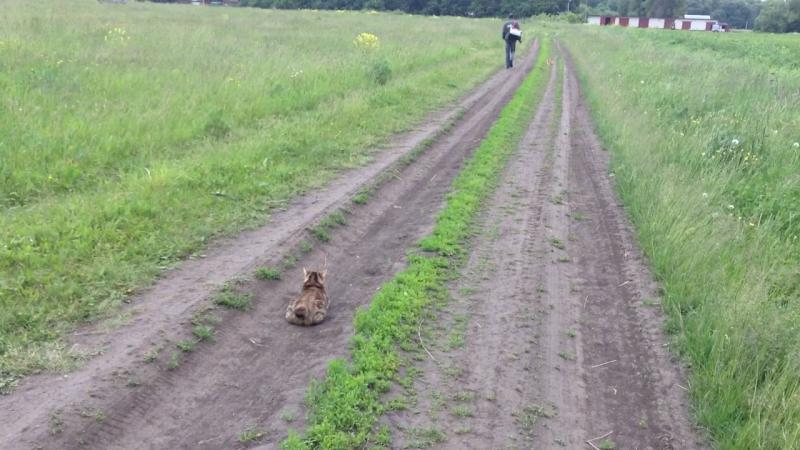 Кошко- собако- рысь на прогулке