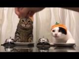 Накорми котика