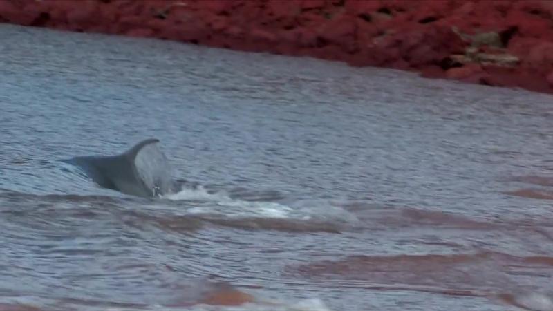 Дельфины. Шпион в стае 2 серия