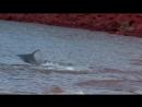 Дельфины Шпион в стае 2 серия