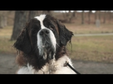 Nissan X-Trail 4Dogs concept- the pawfect car for family adventures