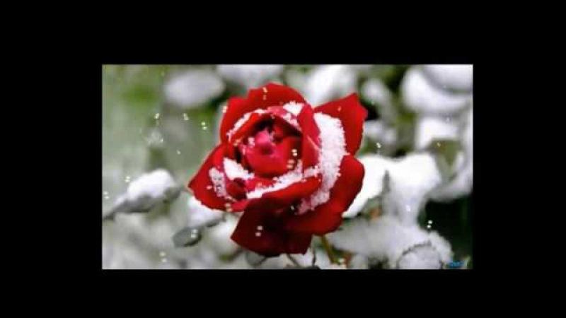 Падает снег...Людмила Купаева,муз. и исп. Самуила Фрумовича СамуилФрумович