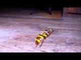 Yellowjacket Hover Fly - Муха журчалка (Сирф) Milesia virginiensis NC