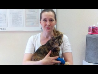 Городская ветеринарная клиника - лечение интоксикации кошки - отзыв Таисии