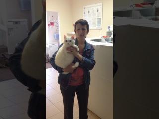 Отзыв о Городской Ветеринарной Клиники - осмотр кошки - отзыв Натальи