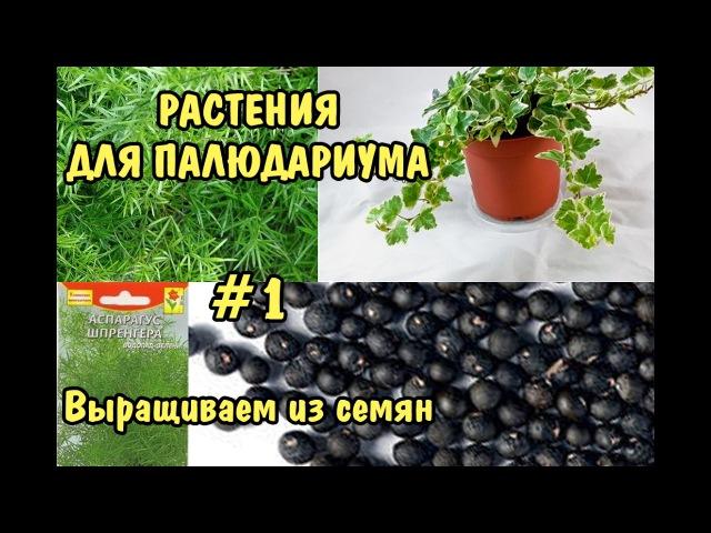 РАСТЕНИЯ ДЛЯ ПАЛЮДАРИУМА. 1 Выращиваем из семян. PLANTS FOR PALUDARIUM. 1 Grown from seed