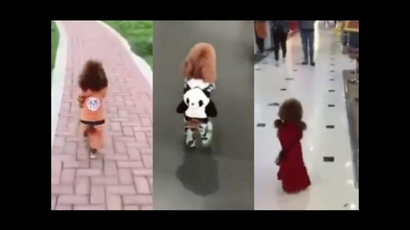 Inilah anjing terpintar dan terlucu di dunia anda akan terkejut saat anjing ini berjalan