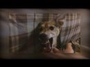 Очень злая собака 2