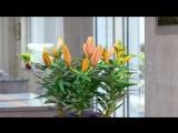 Умный цветочный горшок Parrot Pot