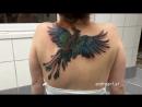 Тату-мастер создал потрясающую татуировку феникса на спине женщины