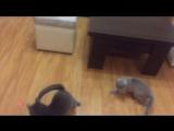 #зайки и #зайчик #Питомник #doctor_fluffy_army #british_cats #Волгоград