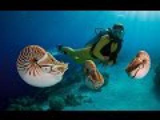 Одиссея Жака Кусто: 500 миллионов лет на дне моря (1973)