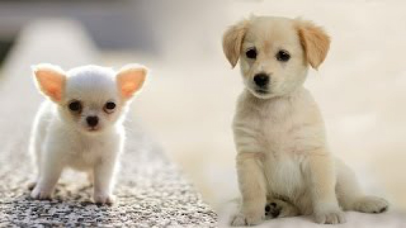 Раз собака, два собака... Веселый клип про собак - детская песня!
