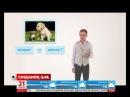Кіт і собака домашні чи свійські тварини експрес урок