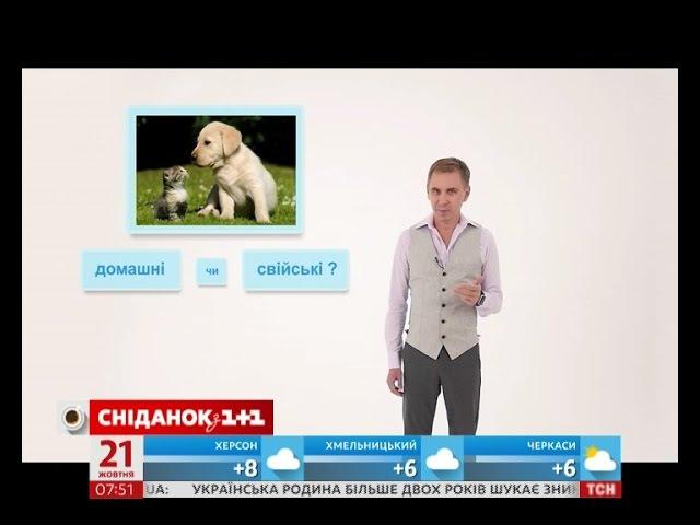 Кіт і собака – домашні чи свійські тварини – експрес-урок