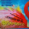 Фламинго. Кировск - Апатиты - Мурманск