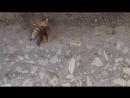 Бабочка против шершня август 2016 год, Абхазия