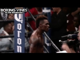 BOXING_VINES (Boxing Vines) l vk.com/boxingvines
