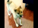 собака -уебака
