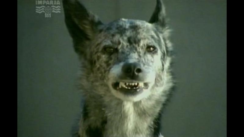 Т/С Собака по имени Снобз 6 серия (2003г)