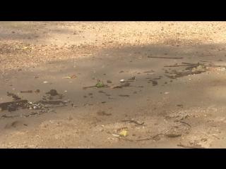Краб-пальмовый вор