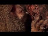 Smallest Monkey Turf War _ Worlds Weirdest