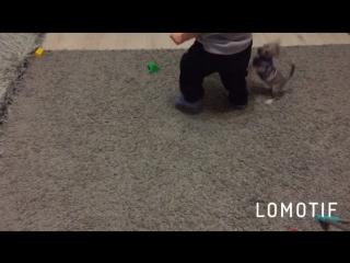 Тэффи любит снимать носки Филу