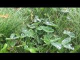 Life video14.10.2017Yoshkar-Ola