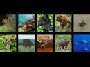 """Learn to Fly"" - #Disneynature 's Born in China - реклама"